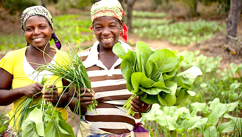 Local vegetables R&D for smallholders