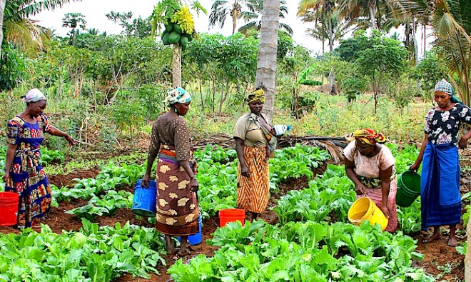 Achieving Gender Equality in Agriculture - http://www.usaid.gov/sites/default/files/nodeimage/5842085889_620656d5fe_b_0.jpg