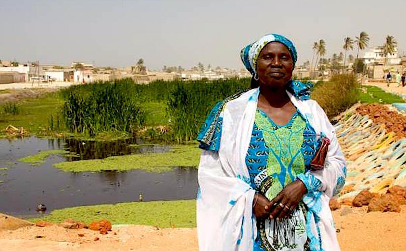 Floodwater used to grow herbs in Dakar(Senegal)