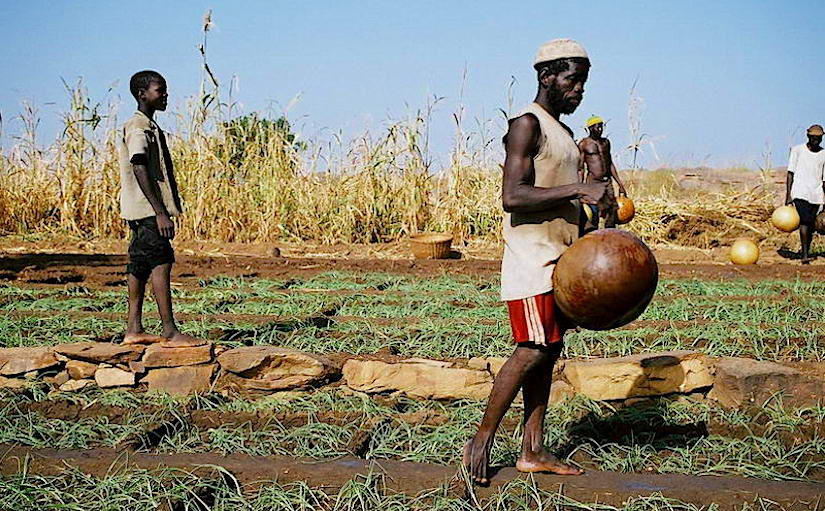 How to Keep Hunger At Bay in theSahel?