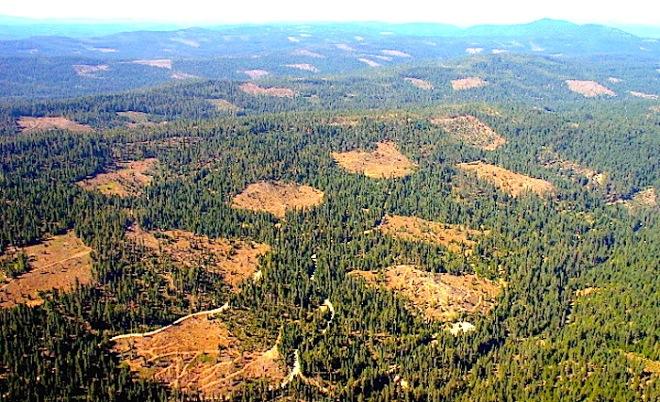 http://www.cserc.org/main/issues/forests/BlueCreek.jpg
