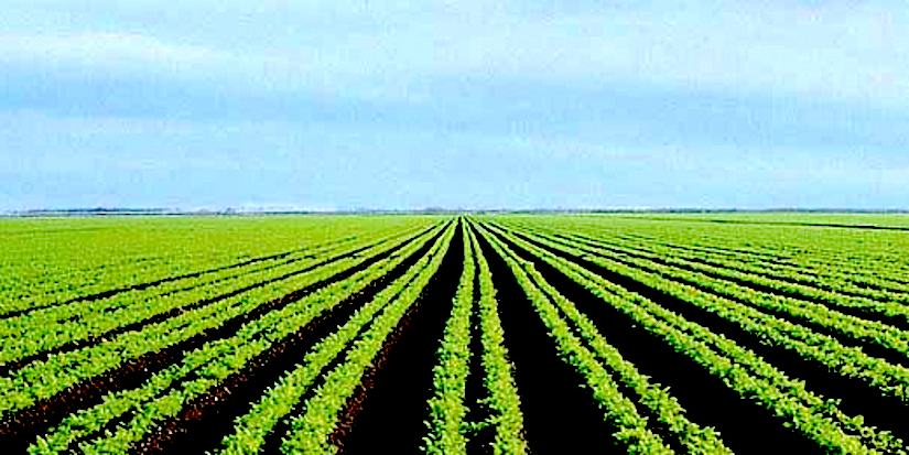 Agriculture plan in SouthAfrica