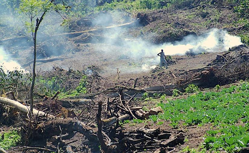 Image result for maasai mau forest destruction