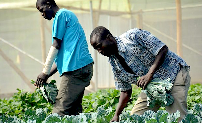 Climate-smart agriculture (CSA)
