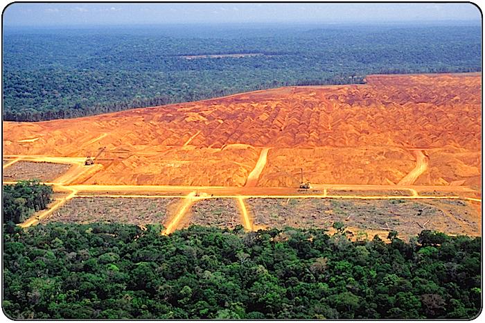 http://bloomtrigger.com/Content/PagesImages/deforestation-framed-images-for-rainforest-pages.png