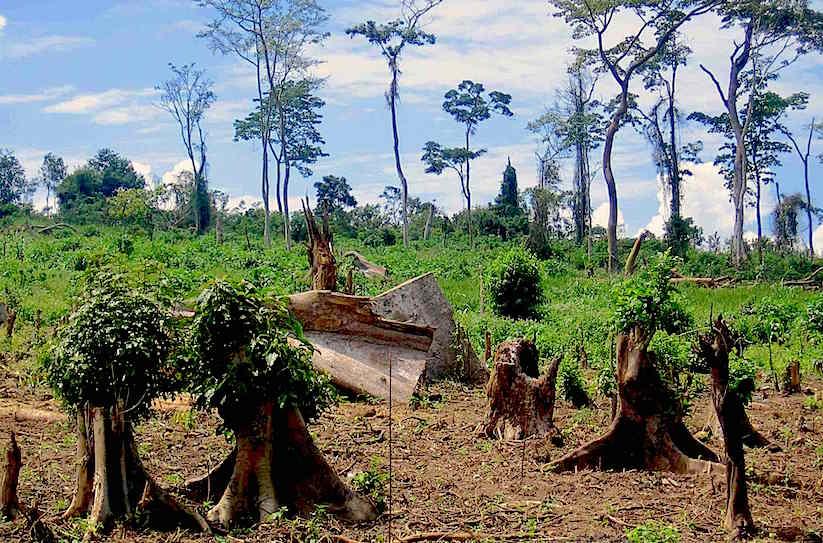 Deforestation in Uganda