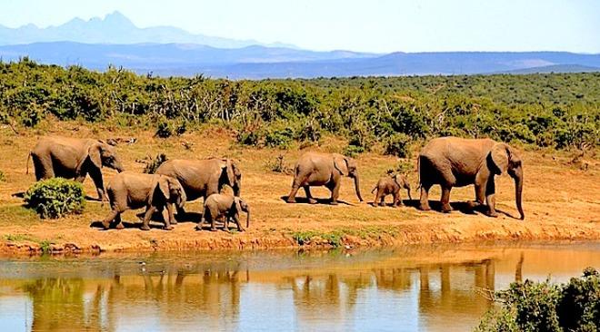 http://pixabay.com/static/uploads/photo/2014/03/04/15/10/elephant-279505_640.jpg