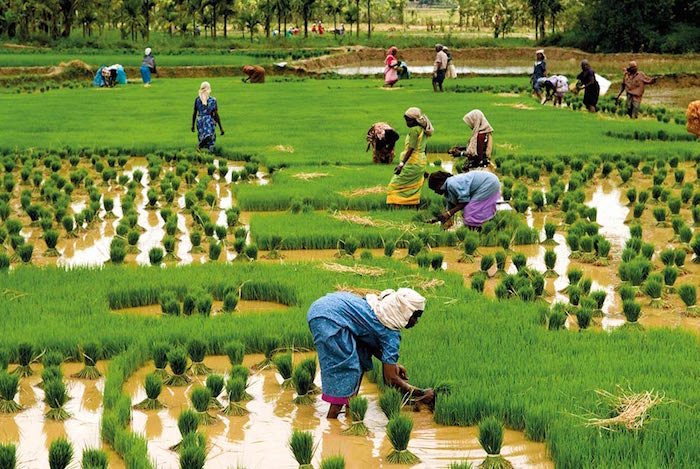 Family farming - http://www.aventure.ac.in/wp-content/uploads/2014/03/farming.jpg