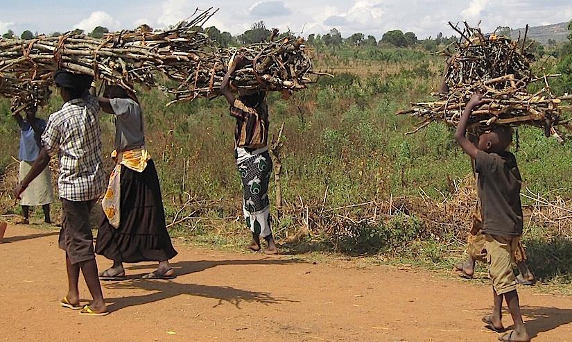 Firewood in drywoodlands