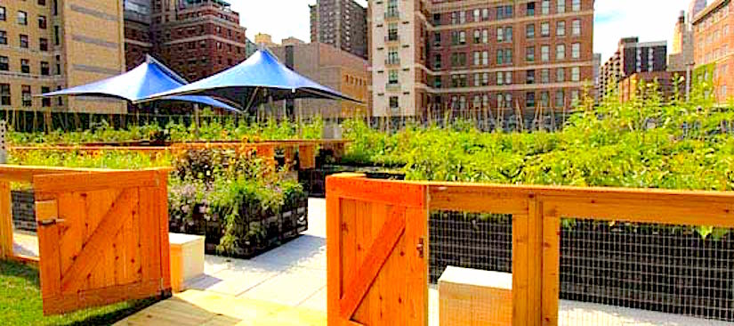 The future of rooftop gardens