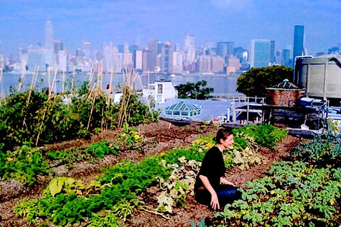 Rooftop Gardening rooftop gardening – desertification