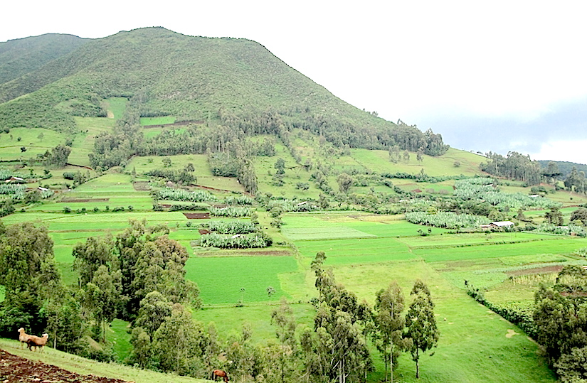 Watershed Management inEthiopia