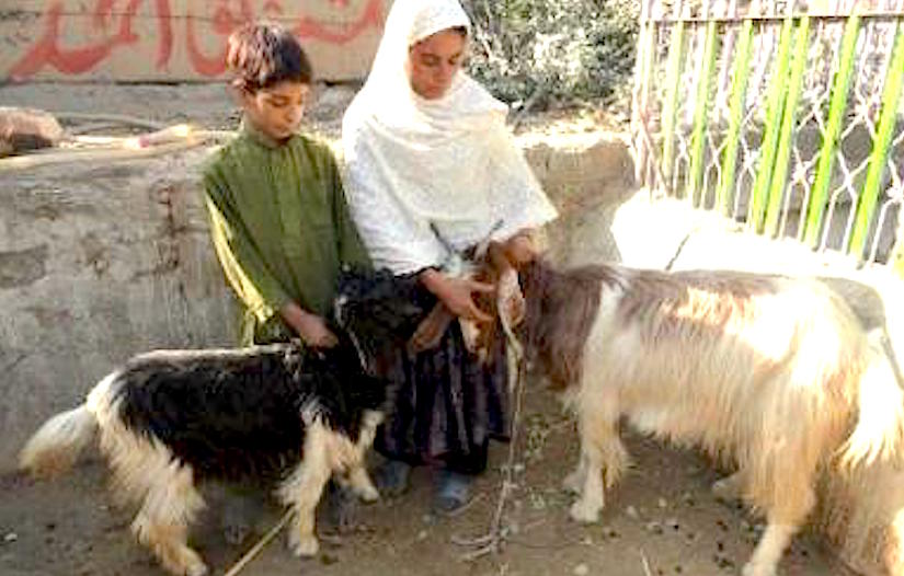 Goats generated enormous benefits for the poorest women