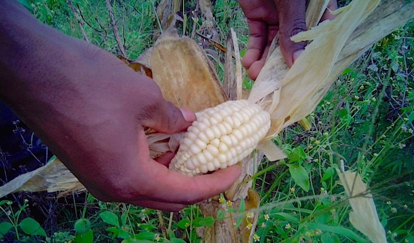 Food crisis in Zimbabwe?