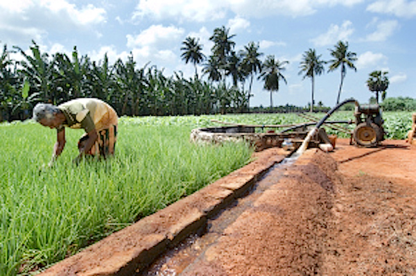Sustainability of Jaffna's groundwater (Sri Lanka)