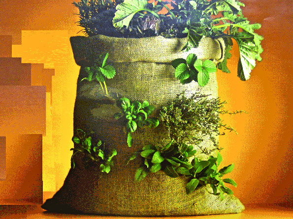 The 'garden-in-a-sack' concept to alleviate hunger and malnutrition