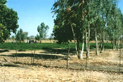 Community garden in Niou, Burkina Faso - Photo WVC 1997-12.