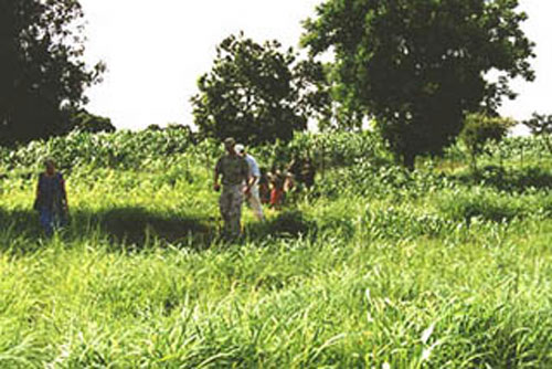 Sorghum fields in Niou: Foreground= non-treated; Background= treated with the soil conditioner TerraCottem - Photo WVC 2000-07-02.