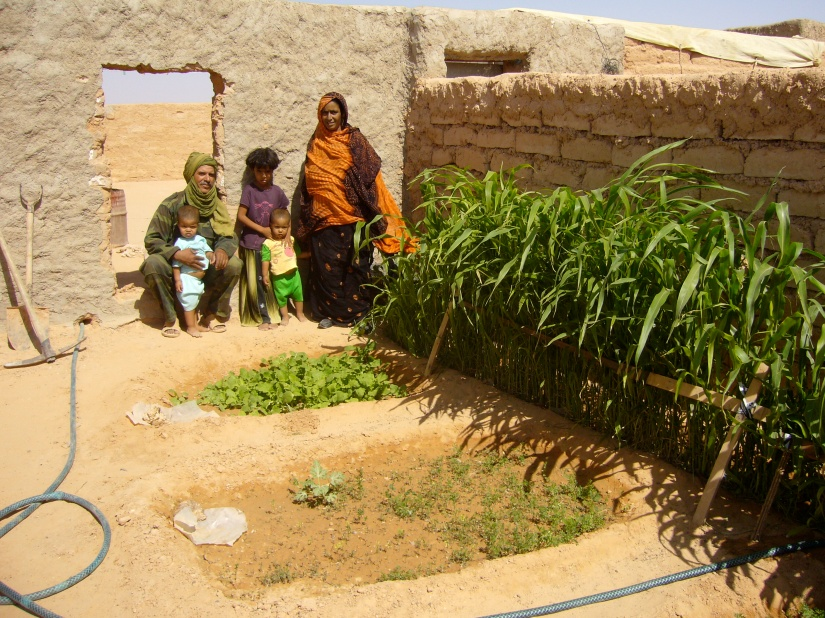 Photo credit WVC: 2007-11-Algerian refugee camps LAYOUN-JARDIN-FAM. First tests with TerraCottem soil conditioner -P1010392.JPG
