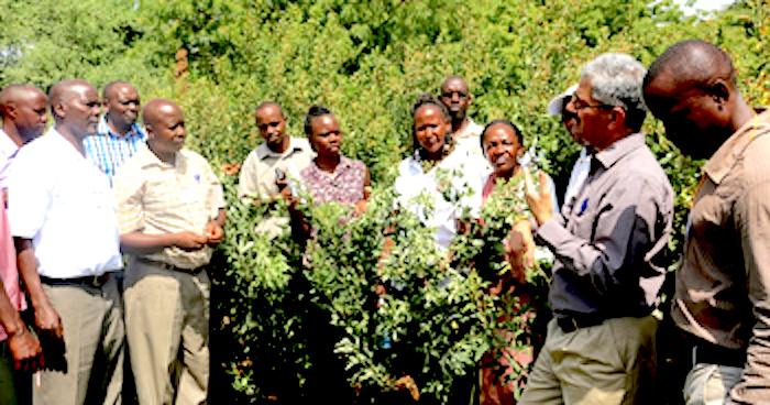 Smallholder farmers andresearch