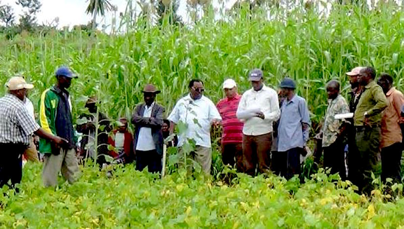 Crucial role of private sector for smallholder farmers inAfrica.