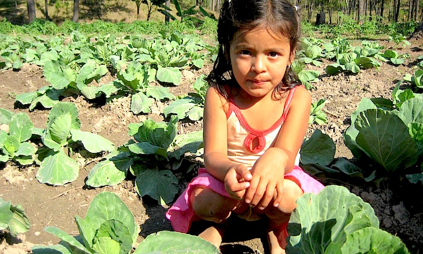 http://foodtank.com/assets/images/head/Girl_with_Cabbage_Sustainable_Harvest_International.jpg