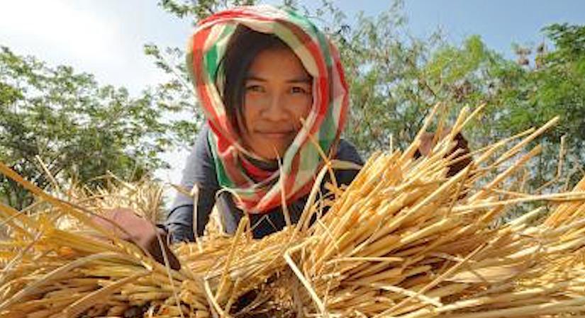 http://f.tqn.com/y/foodpolicy/1/W/g/0/-/-/shutterstock_153628703.jpg
