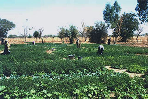 Community garden for the women of Niou (Prov. Kourweogo, Burkina Faso) with the application of the soil conditioner TerraCottem - Photo Credit WVC 1997-12