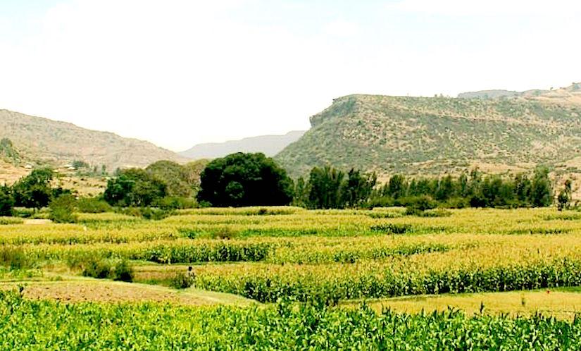 Green Revolution inEthiopia