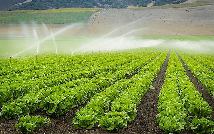 Drought- or flood-resistant crops to make agriculture in California moreresilient