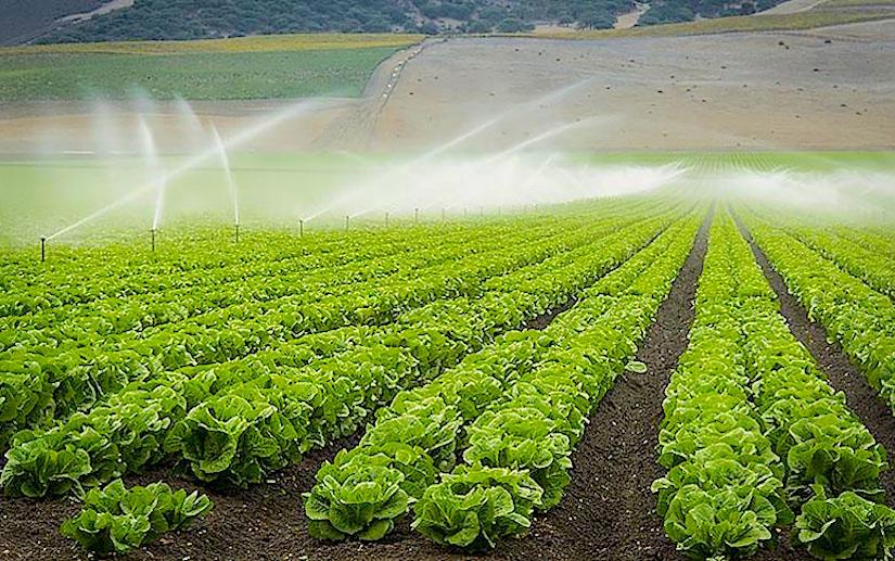 Sprinklers and lettuce in Salinas, California - http://l2.yimg.com/bt/api/res/1.2/eLrplFjGrl0a7mprAVJGkA--/YXBwaWQ9eW5ld3NfbGVnbztmaT1maWxsO2g9NTE4O2lsPXBsYW5lO3B5b2ZmPTA7cT03NTt3PTc3NQ--/http://media.zenfs.com/en_us/News/Takepart.com/CA_Lettuce-MAIN.jpg