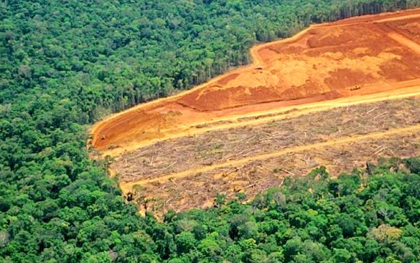http://ecodaily.org/wp-content/uploads/2015/04/deforestation_brazil.jpg