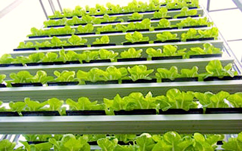 Climate change and verticalgardening