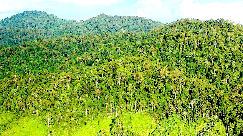 https://grist.files.wordpress.com/2015/08/indonesia-rainforest-e1439493690987.jpg?w=1024&h=576&crop=1