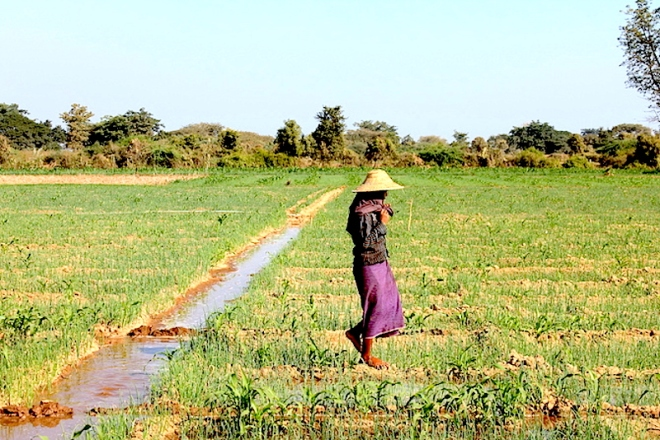 A small-holder irrigation scheme in the Dry Zone of Myanmar.  Photo: Matthew McCartney - http://g9jzk5cmc71uxhvd44wsj7zyx.wpengine.netdna-cdn.com/wp-content/uploads/2015/09/A-small-holder-irrigation-scheme-in-the-Dry-Zone-of-Myanmar.-Photo_-Matthew-McCartney.jpg