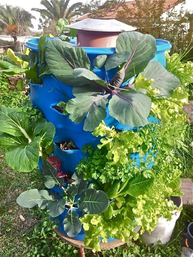 * Barrel - Vegetables - Photo Grow Food, Not Lawns - 542232_449799711742313_474788682_n.jpg