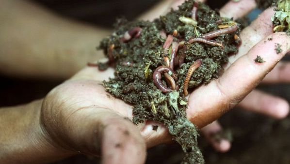Earthworm technology for the next greenrevolution
