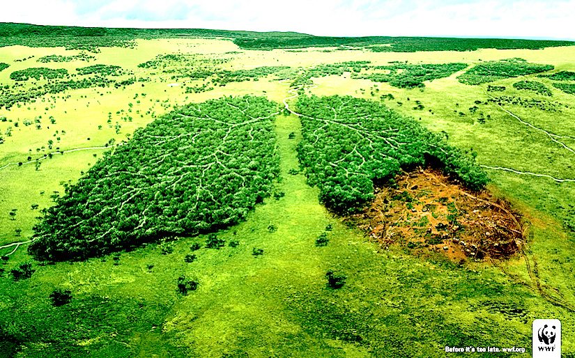 http://followgreenliving.com/wp-content/uploads/2014/05/deforestation-and-lungs.jpg