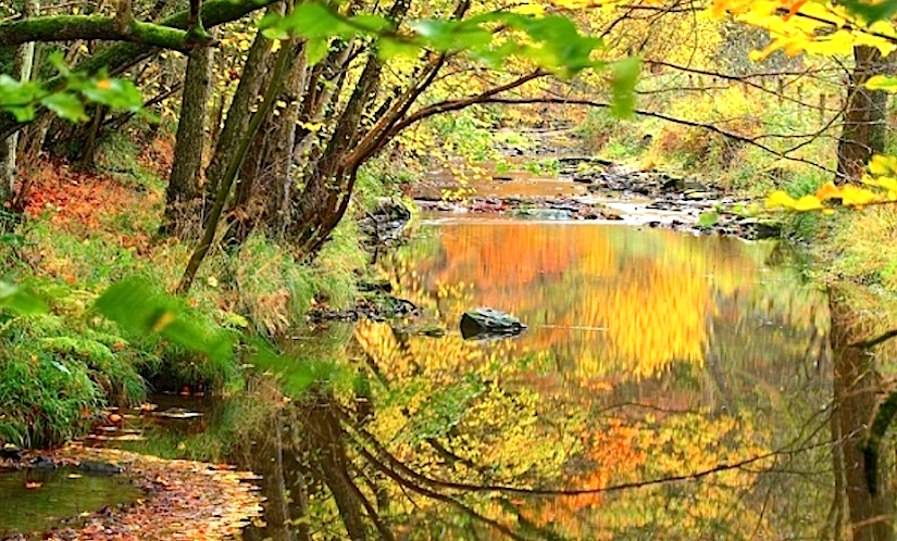 http://images.natureworldnews.com/data/images/full/18380/dowles-brook.jpg?w=600