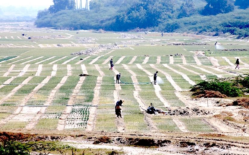 http://g9jzk5cmc71uxhvd44wsj7zyx.wpengine.netdna-cdn.com/wp-content/uploads/2015/09/Irrigation-of-onions-in-a-dry-river-bed.-Photo_-Matthew-McCartney.jpg