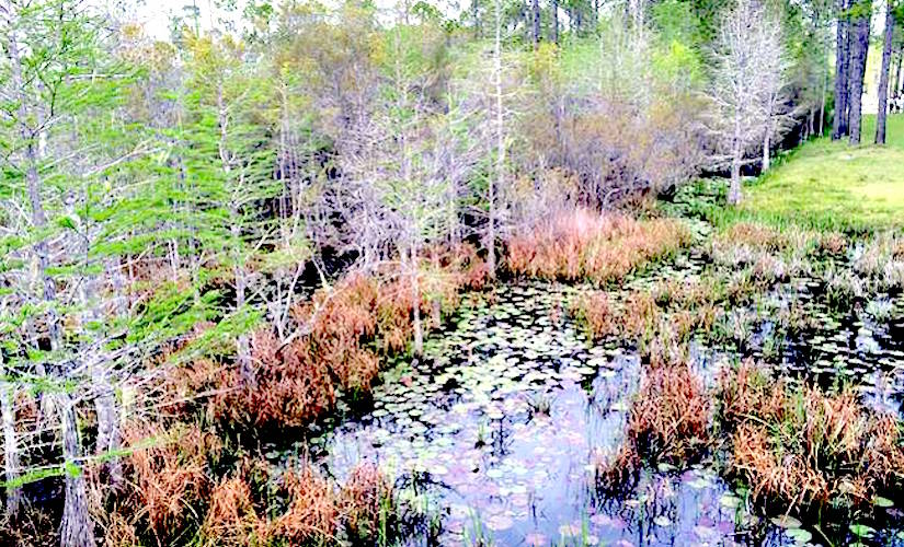 http://media.treehugger.com/assets/images/2015/09/NASF_FloridaAudit.jpg.650x0_q70_crop-smart.jpg