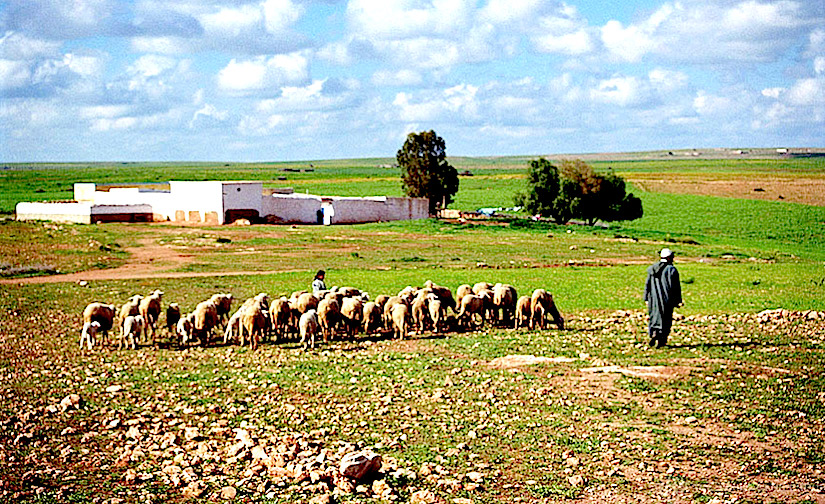 http://static.un.org/News/dh/photos/large/2015/October/10-14-2015Shepherd_Flock.jpg