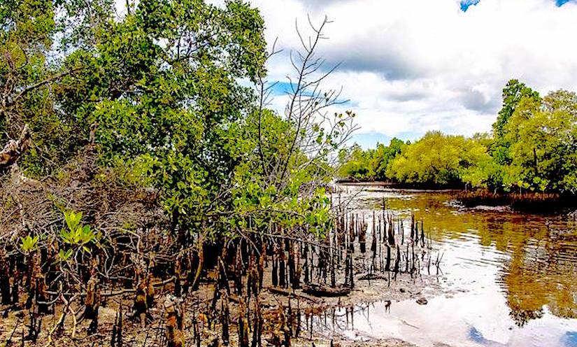 http://media.treehugger.com/assets/images/2015/10/mangroves-republic-of-change.jpg.662x0_q70_crop-scale.jpg