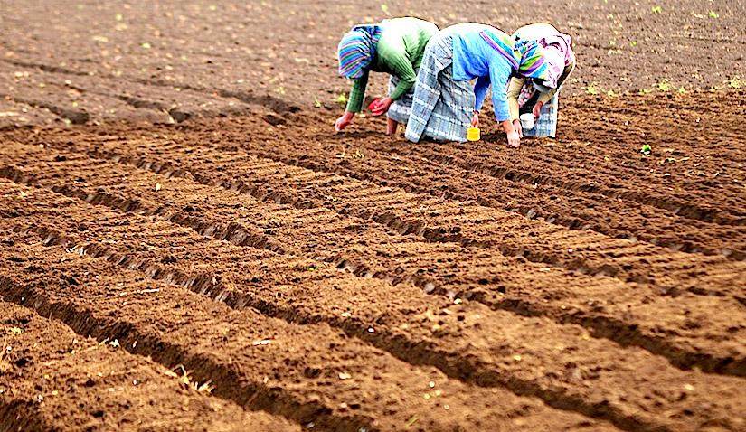 Food insecurity and El Niño in CentralAmerica