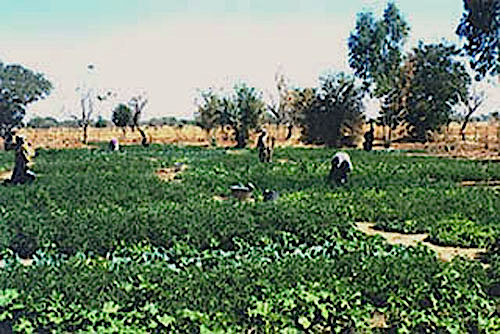 1997-12-02-General view 02 of a community garden in Niou (Burkina Faso) - (Photo WVC).