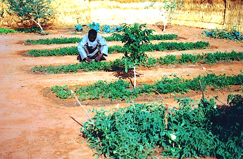 1998-02-A school garden in Niamey (Niger) - (Photo WVC).
