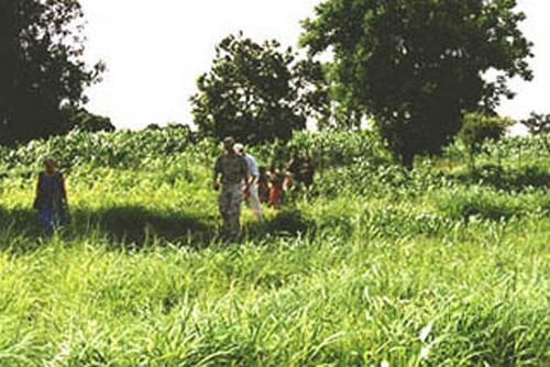 2000-07-02-Sorghum.jpg