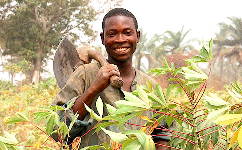 Quality seeds inNigeria