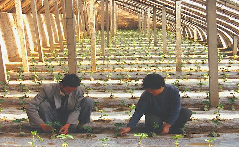 Photo WVC: Use of TC in Chinese greenhouse in Hong He