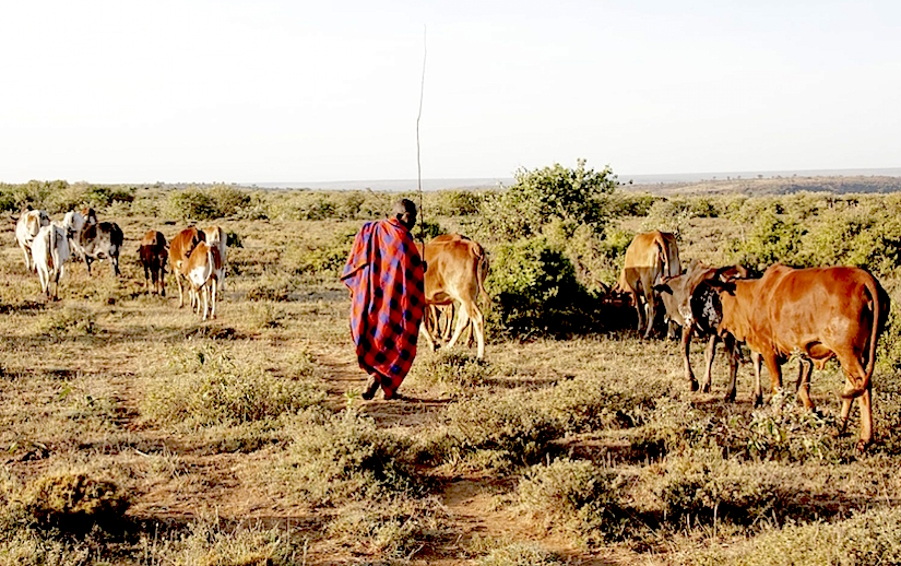 Pastoralists may benefit from new rangelands management approaches